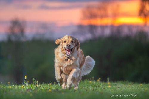 Koerte-pildistamine---Lemmikloomade-pildistamine---Fotograaf-Aigar-Nagel-1