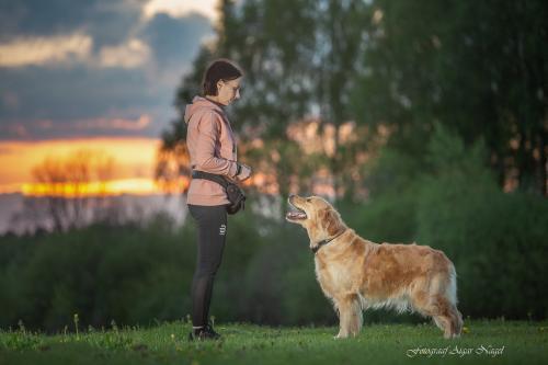 Koerte-pildistamine---Lemmikloomade-pildistamine---Fotograaf-Aigar-Nagel-3
