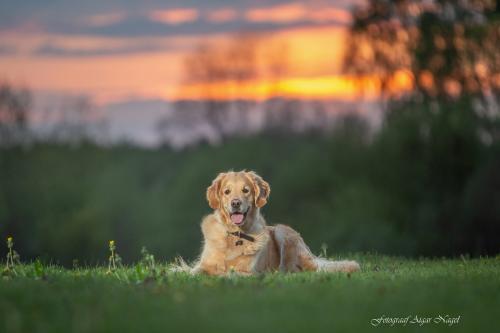 Koerte-pildistamine---Lemmikloomade-pildistamine---Fotograaf-Aigar-Nagel-4